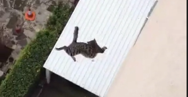 Cat falls from building