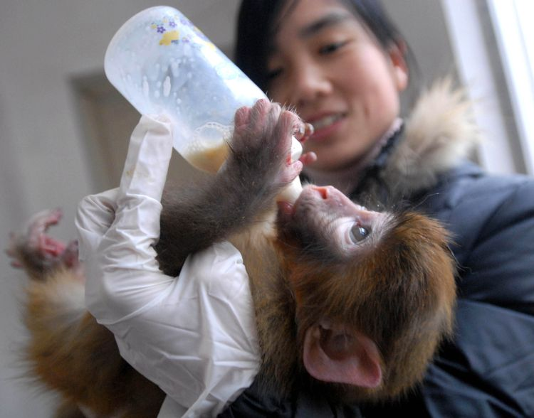 Japanese zoo apologizes for naming monkey after Princess ...